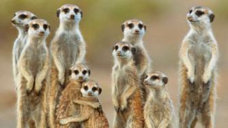 """Visita virtuale """"live"""" allo Zoo di Chester"""